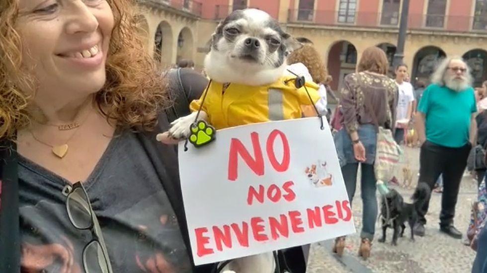 Concentración contra el envenenamiento de perros en Gijón.Concentración contra el envenenamiento de perros en Gijón