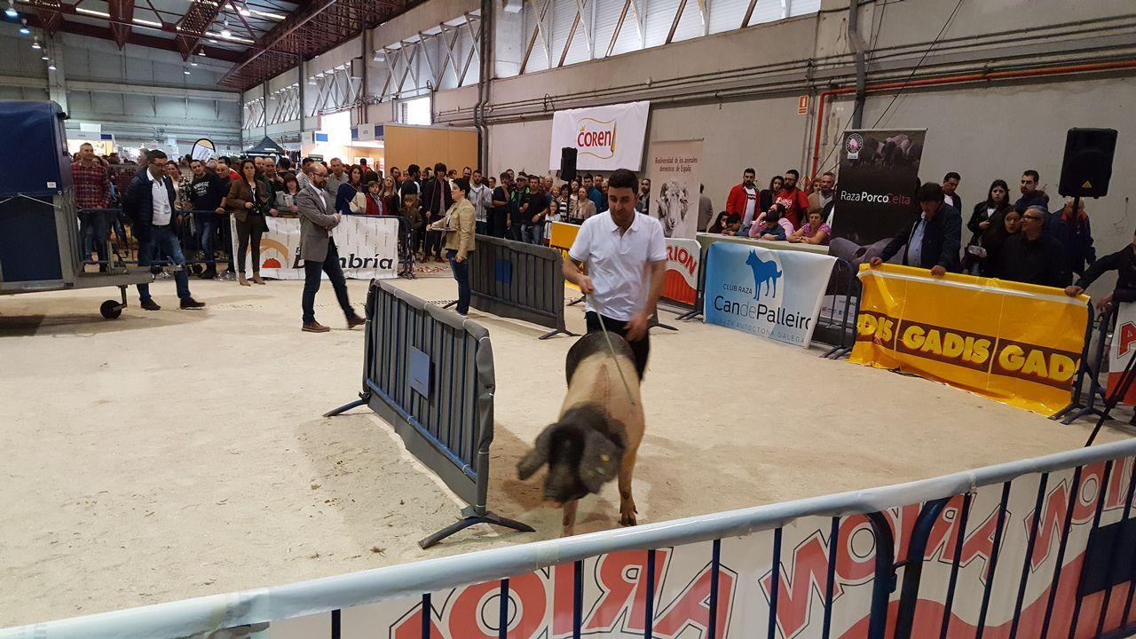 Mora, ganadora del I Concurso Nacional de Manexo de Porco Celta.