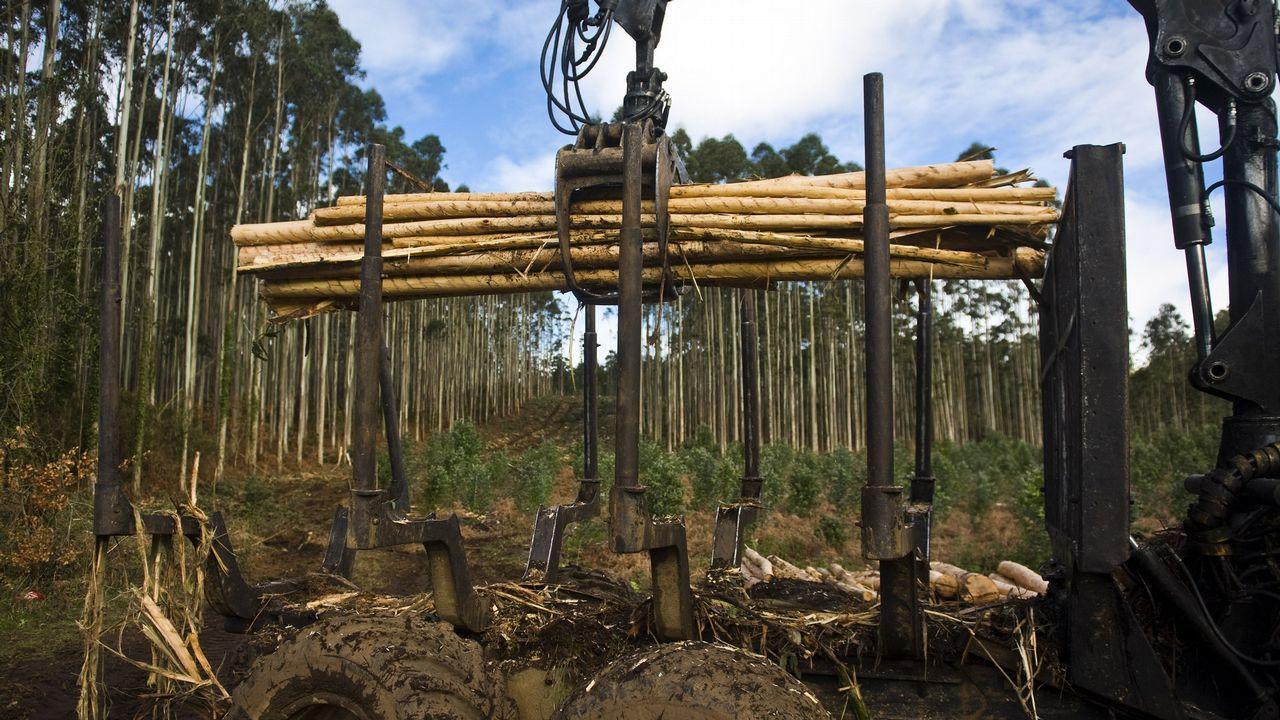 Estado del incendio declarado en el Monte Sollera.Bosque de eucaliptos en el entorno de Pontevedra