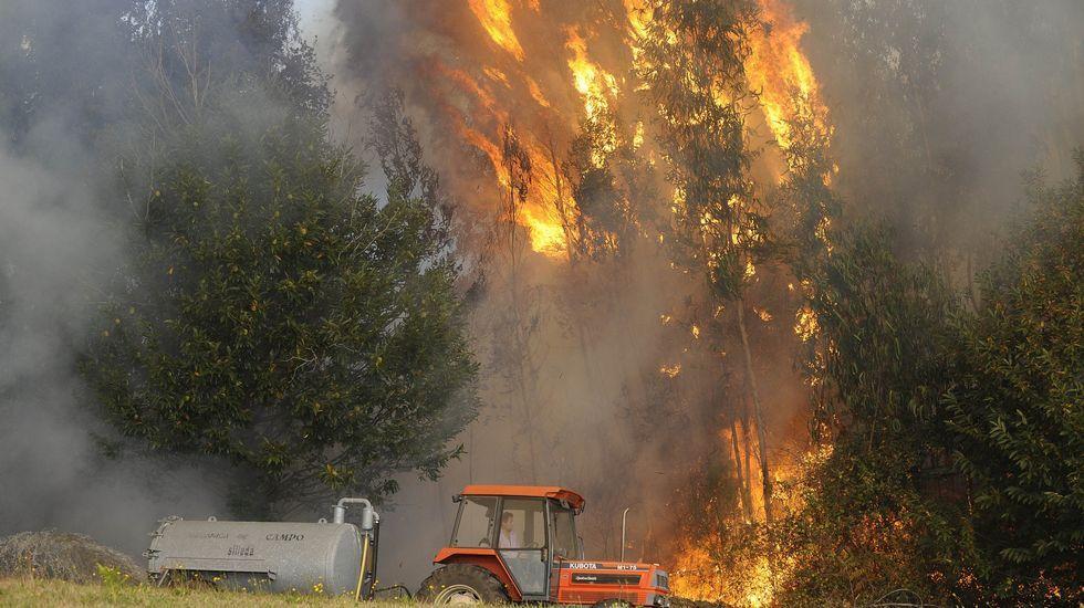 .Os incendios de copa son os que máis rapidamente se extenden dunhas árbores a outras