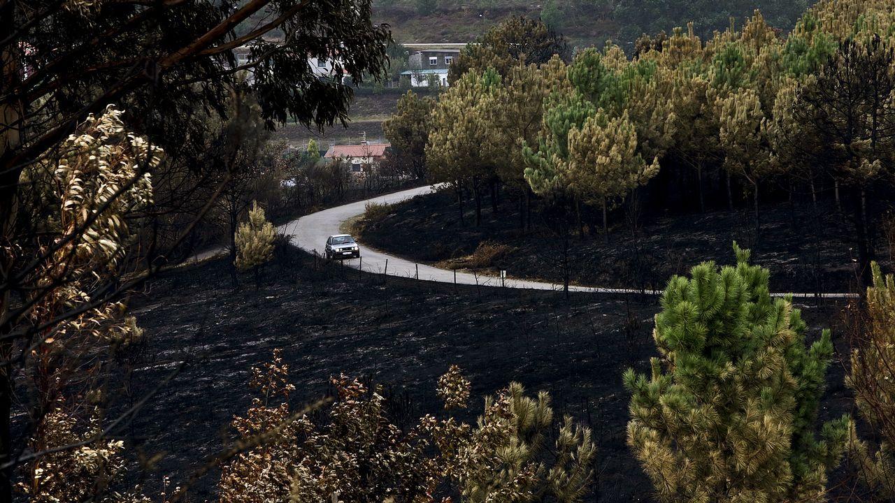Investigan a un grupo organizado en los incendios de Pazos de Borbén