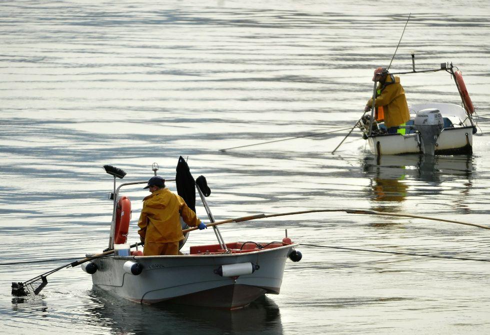 Mariscadores faenando en As Pías, uno de los bancos más productivos de Galicia.