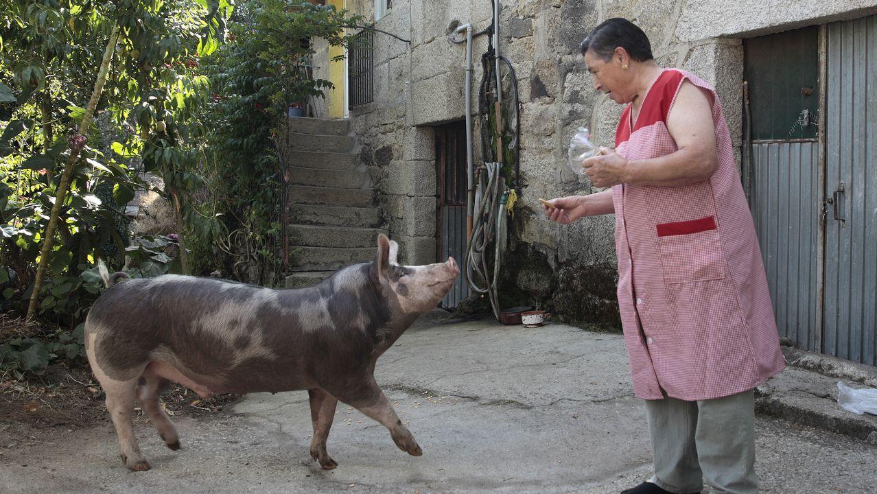 «<span lang= gl >Este porco crese un can. Ata teño que sacalo a facer pis</span>».