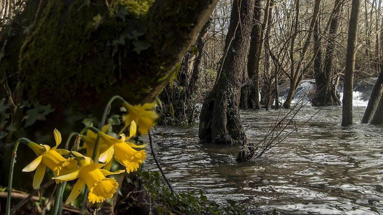 Área natural protegida del río Cabe