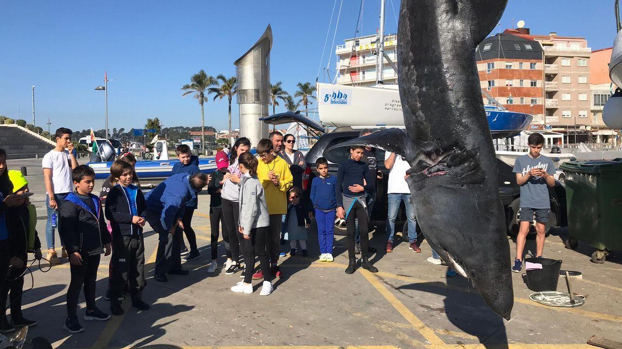 Izado del tiburón peregrino de Sanxenxo