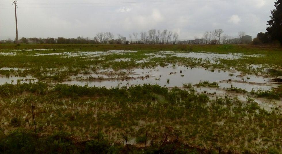 Cientos de fincas de A Limia están inundadas tras las intensas lluvias.