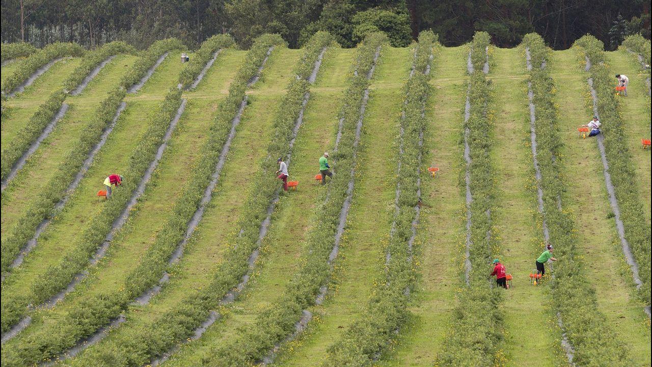 El campo gallego abre paso a nuevos cultivos que superan la huerta tradicional.El ministro de Hacienda en funciones, Cristóbal Montoro