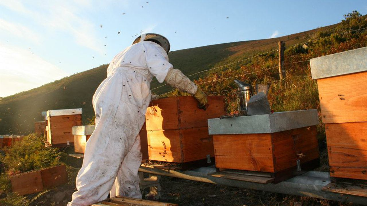 Un apicultor en un colmenar de abejas