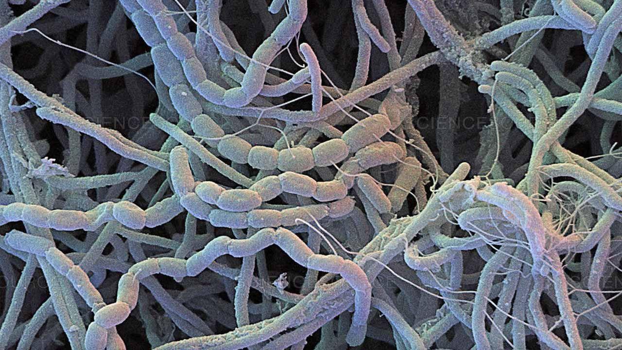 Bacterias que producen antibióticos.Foto de archivo de un grupo de trabajo