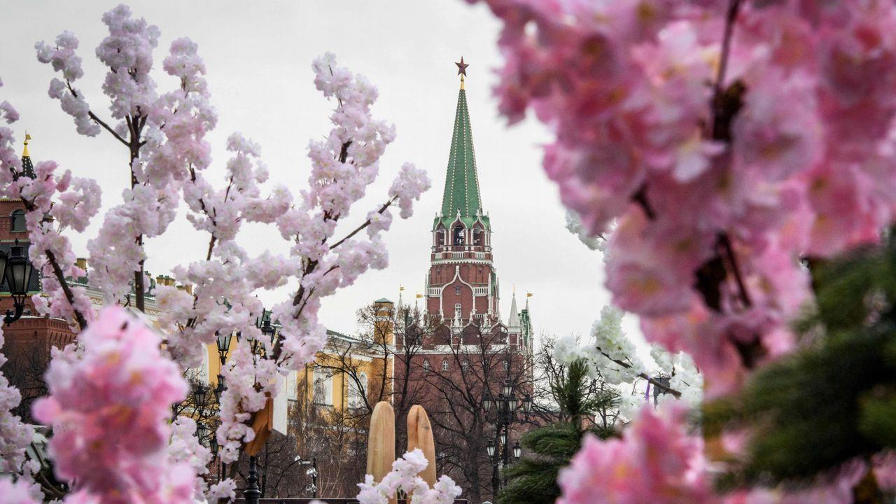 Cerezos artificiales frente al Kremlin