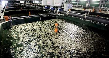 Fiasco en las obras del canal de Panamá.La planta de Mira fue inaugurada en el 2009 y, desde entonces, solo ha acarreado pérdidas a la multinacional.