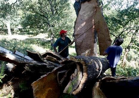 La extracción de corcho es una de las actividades que se realiza.
