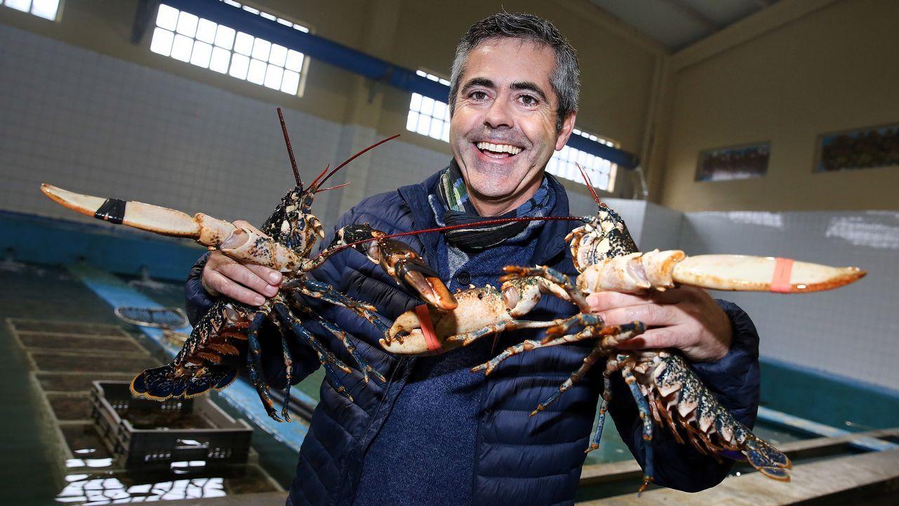El cocinero Berto Domínguez opina sobre la ley de Suiza que prohibe cocinar vivas a las langostas.JERINGUILLAS EN UN EDIFICIO ABANDONADO DE PALAVEA