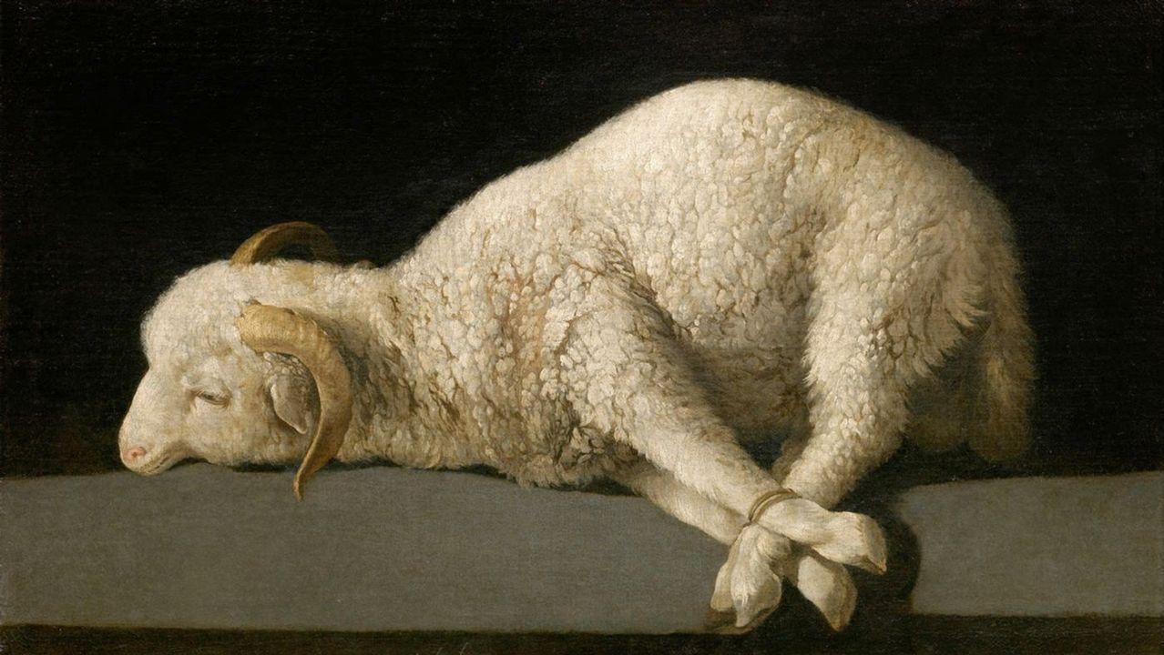 «Agnus Dei» (1635-40), de Francisco de Zurbarán. Museo del Prado