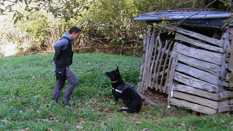 Agentes del Seprona rastrean los montes del Principado en busca de cebos envenenados, con la ayuda de un Guía canino del Servicio Cinológico (Madrid).Agentes del Seprona rastrean los montes del Principado en busca de cebos envenenados, con la ayuda de un Guía canino del Servicio Cinológico (Madrid)