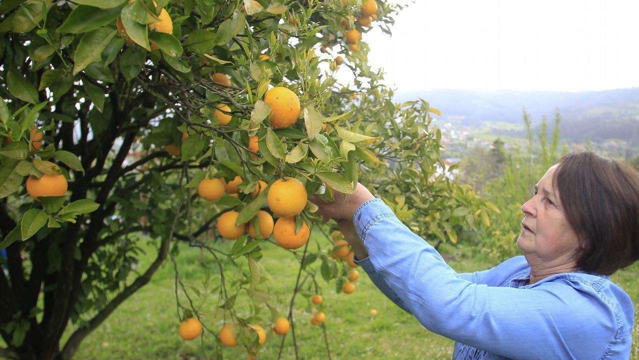Reciclado en Asturias