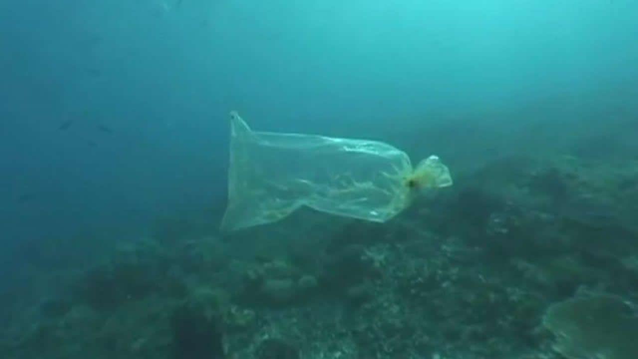 Bienvenidos a la invasión del plástico.