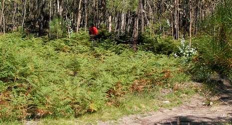 La densa vegetación oculta la mámoa de los senderistas.