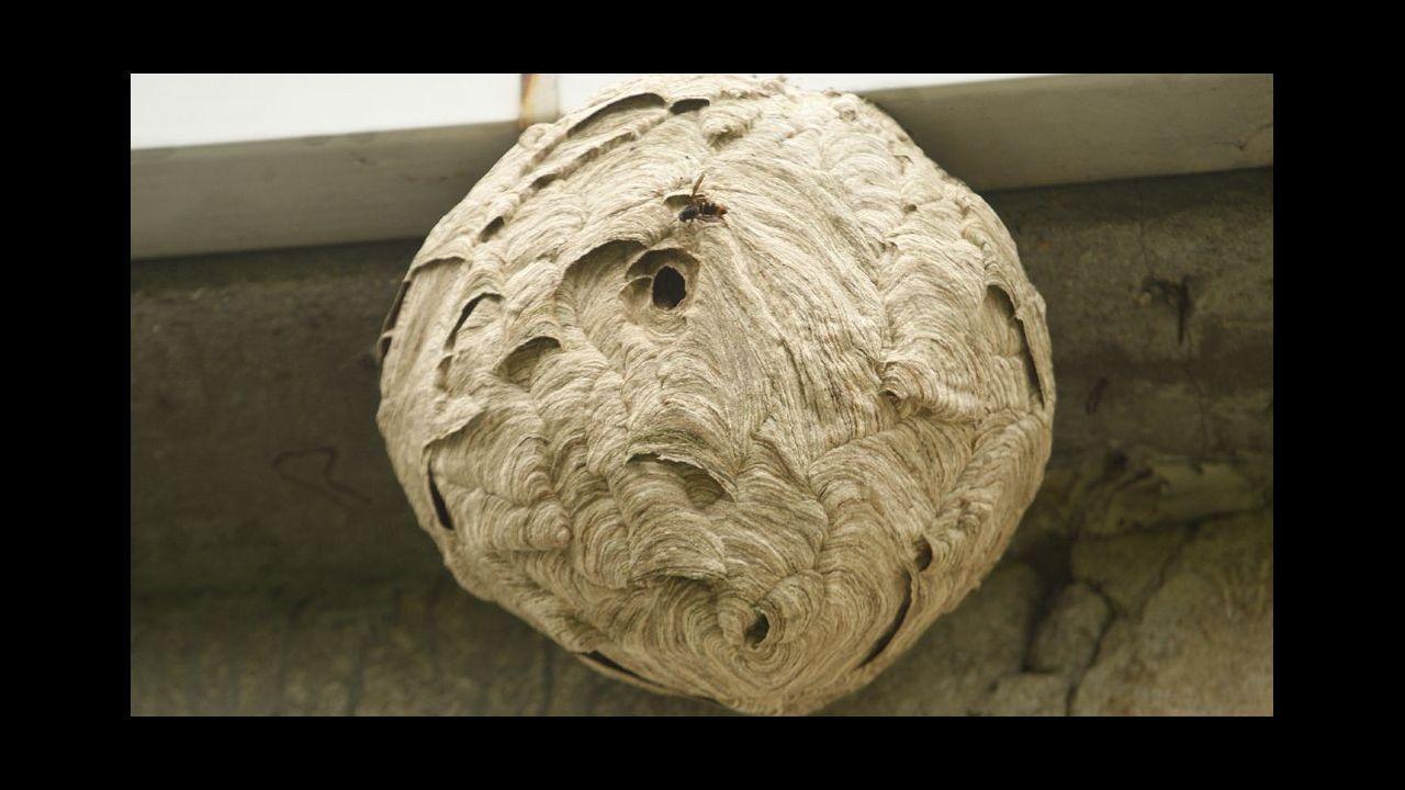Concentración de apicultores gallegos.Un oso pardo