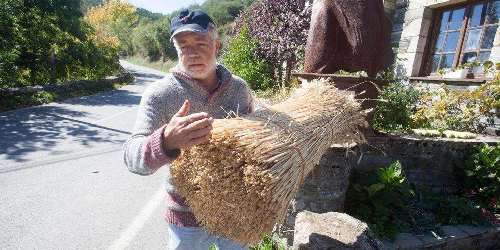 Teitar un hórreo exige unos 1.000 «mollos» como este.