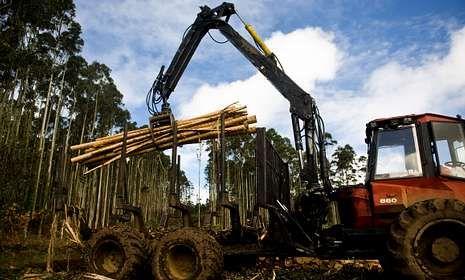 Los ayuntamientos unifican criterios para mitigar los daños que causan las talas de madera.