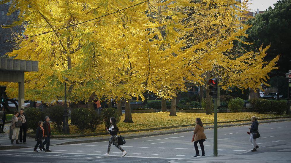 otoño. bosque de ginkgo en cuatro caminos