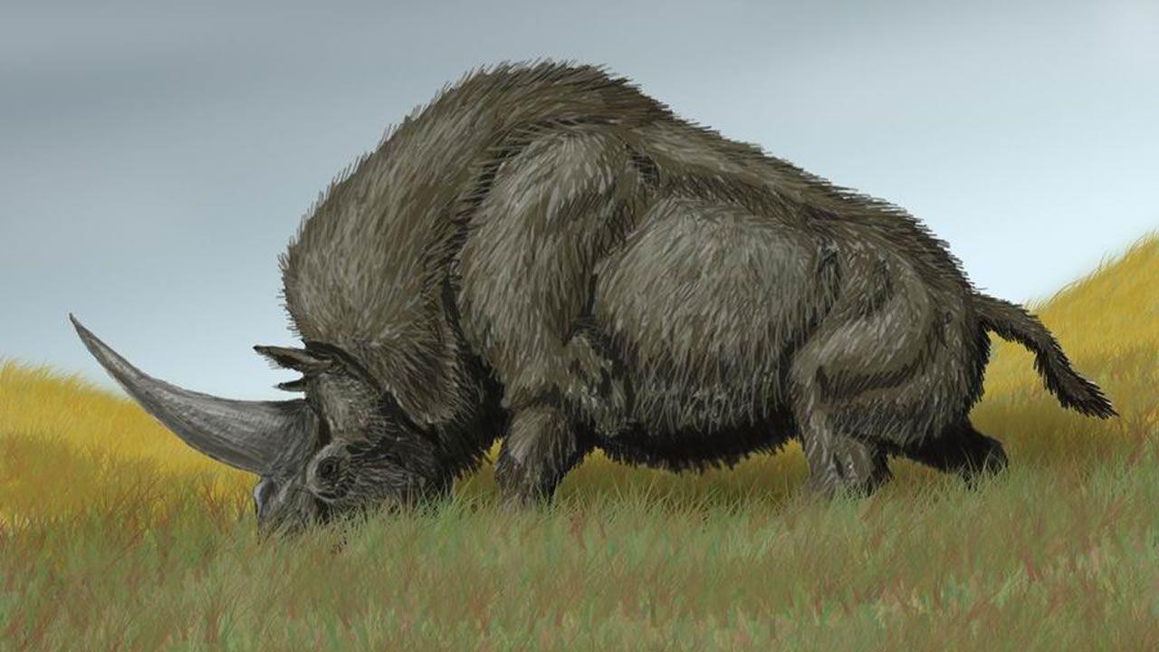 El elasmoterio, una especie extinta de mamífero perisodáctilo de la familia Rhinocerotidae