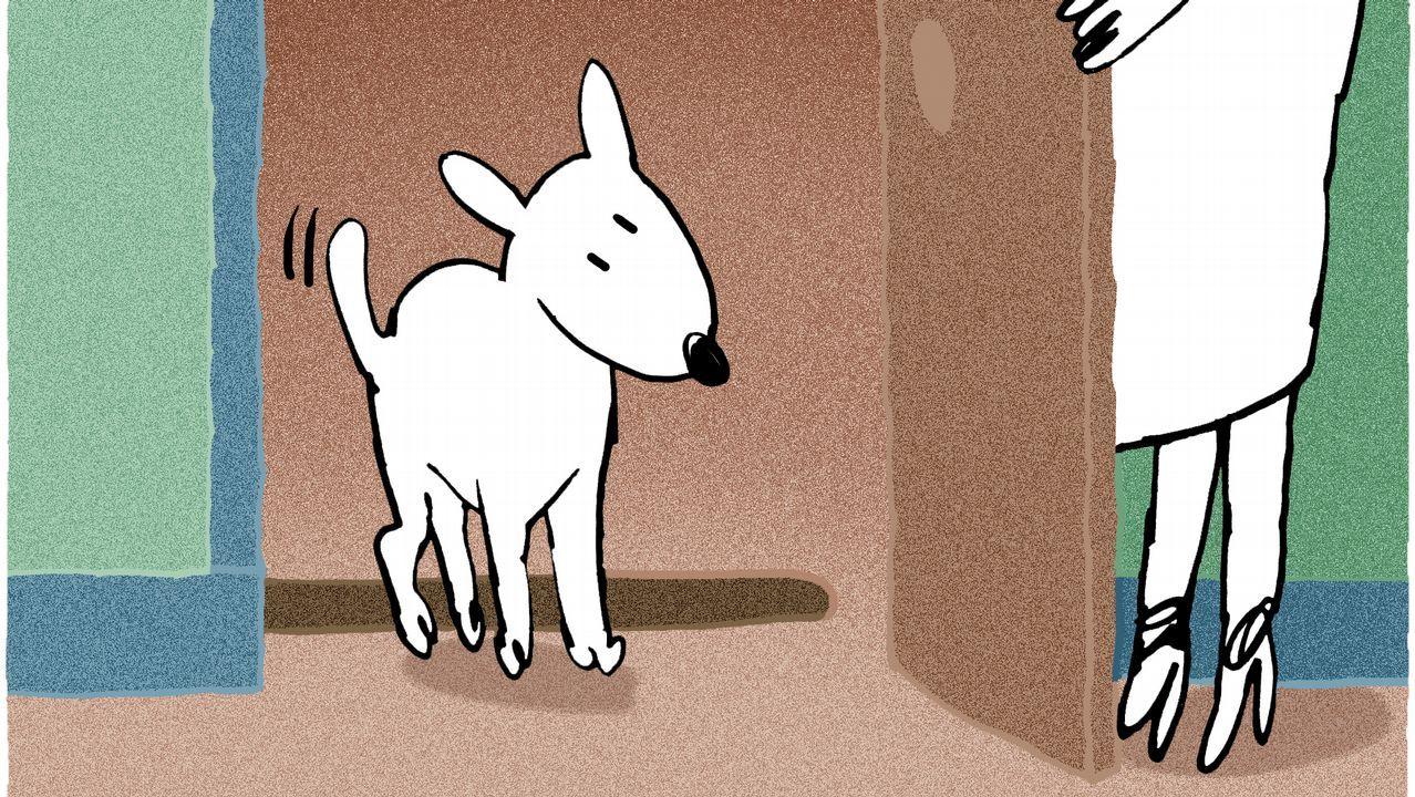 Cachorros buscan hogar en Vilagarcía.Una urna con votos