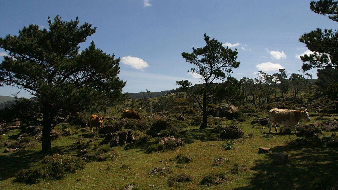 ¡Búscate en la plantación de árboles de la ANPA Monte Tahúme en Oleiros!