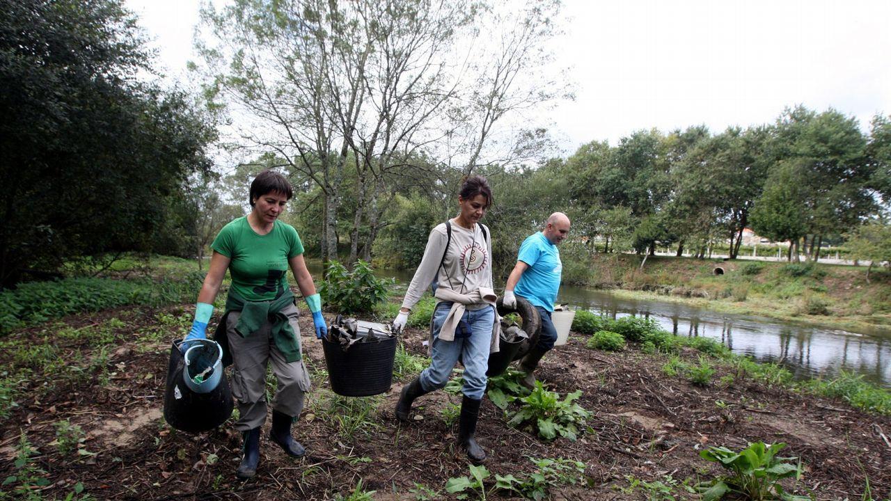 Rescate de cuatro crías de jabalí de un estanque.Ayuntamiento de Oviedo