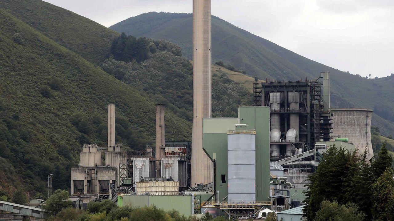 Un ejemplar de lobo.Central térmica de Soto de la Barca (Tineo), de la compañía energética Gas Natural Fenosa.