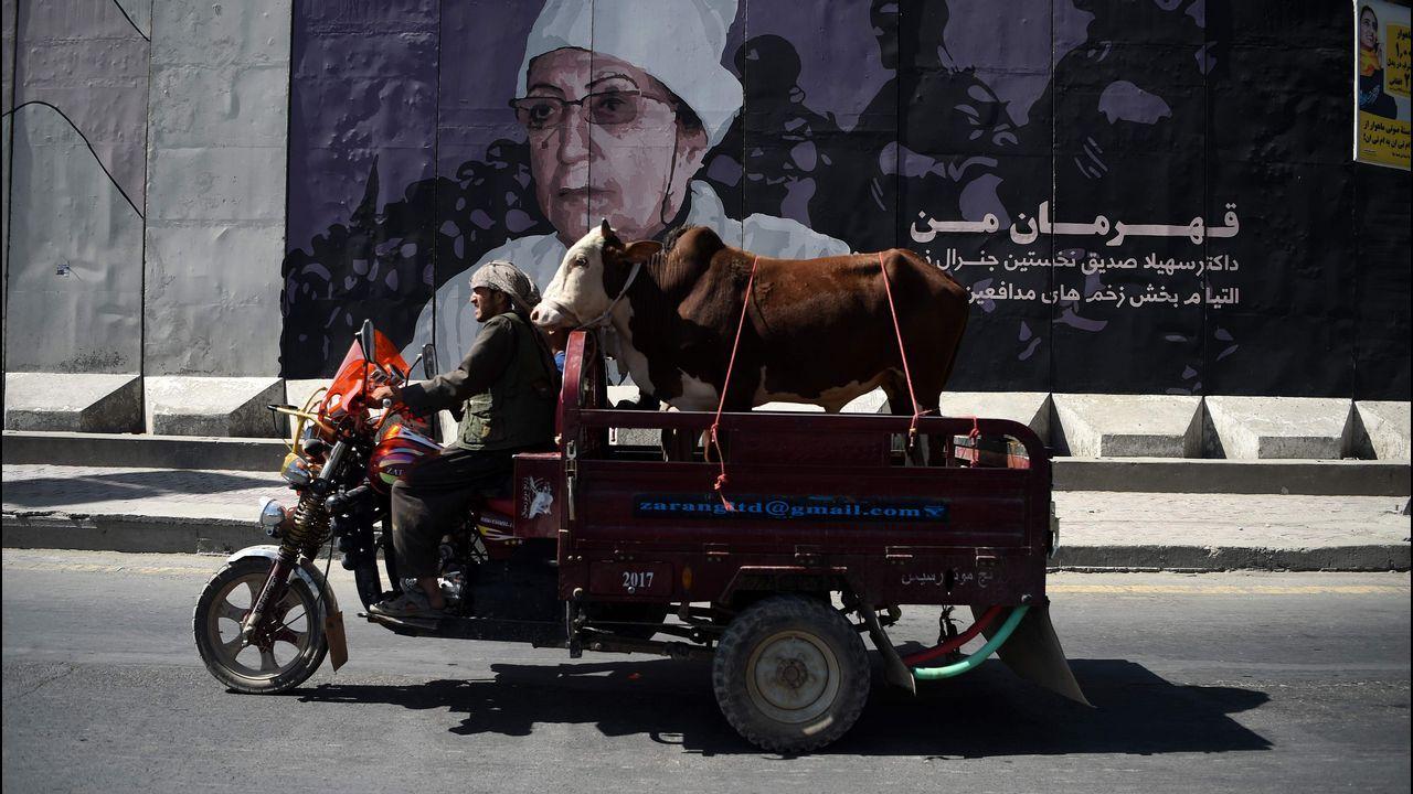 Un hombre afgano transporta a su vaca en una peculiar motocicleta en Kabul.