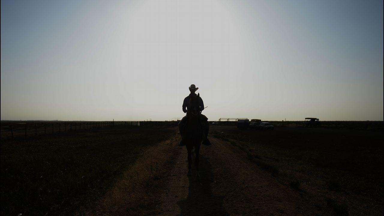 .Un hombre cabalga durante la Saca de las Yeguas, en el Parque Nacional de Doñana