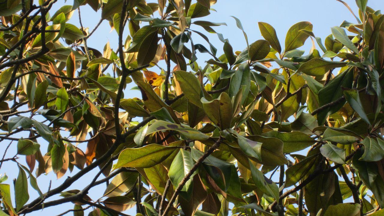 magnolios.Magnolios: su estado «es aún más grave», destaca la experta Sonia Cajade Trías