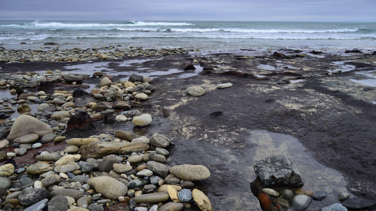 .4. O VICEDO. En el bosque pétreo de Arealonga, de entre 4.300 y 5.300 años, también se hallaron fósiles de ciervos, vacas y caballos.