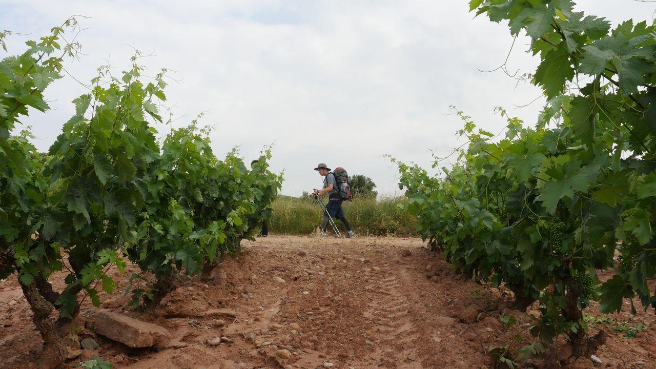 ¿Se nota que La Rioja es tierra de vinos?