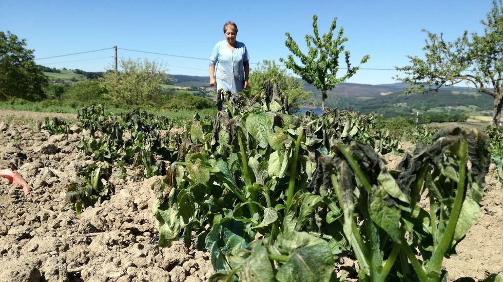 Aumentan los daños en los cultivos de vides, patata y kiwi tras otra noche gélida