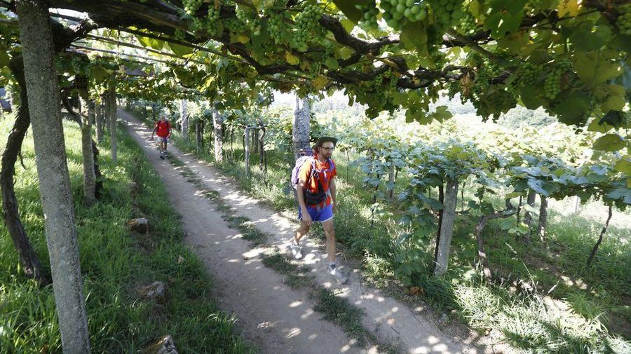 Cómo afianzar el Camino Portugués