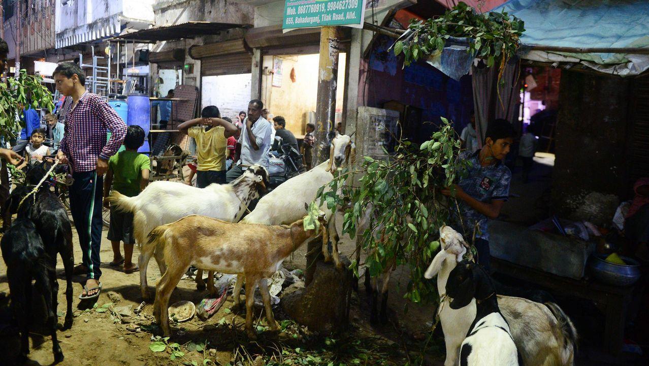 Vendedores de ganado de India esperan a los compradores que se lleven sus cabras antes del festival musulmán Eid al-Adha, que marca el final de la peregrinación a la Meca.
