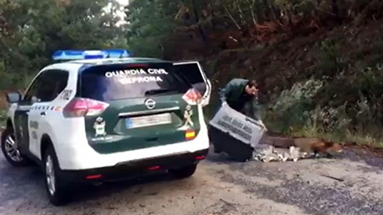 El Seprona pone en libertad a un zorro que rescató en la Pousada de Ribadumia.Incendio en Asturias