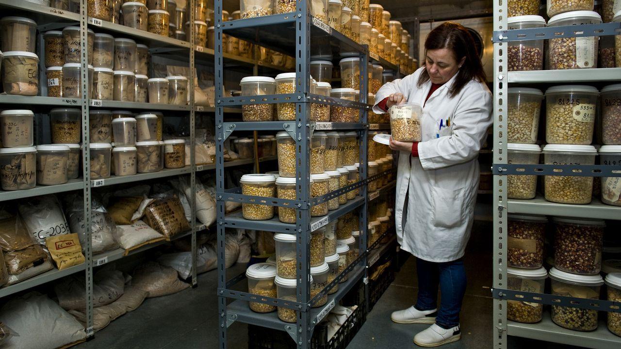 La cámara de germoplasma del Centro de Investigacións Agrarias de Mabegondo guarda 4.500 variedades distintas