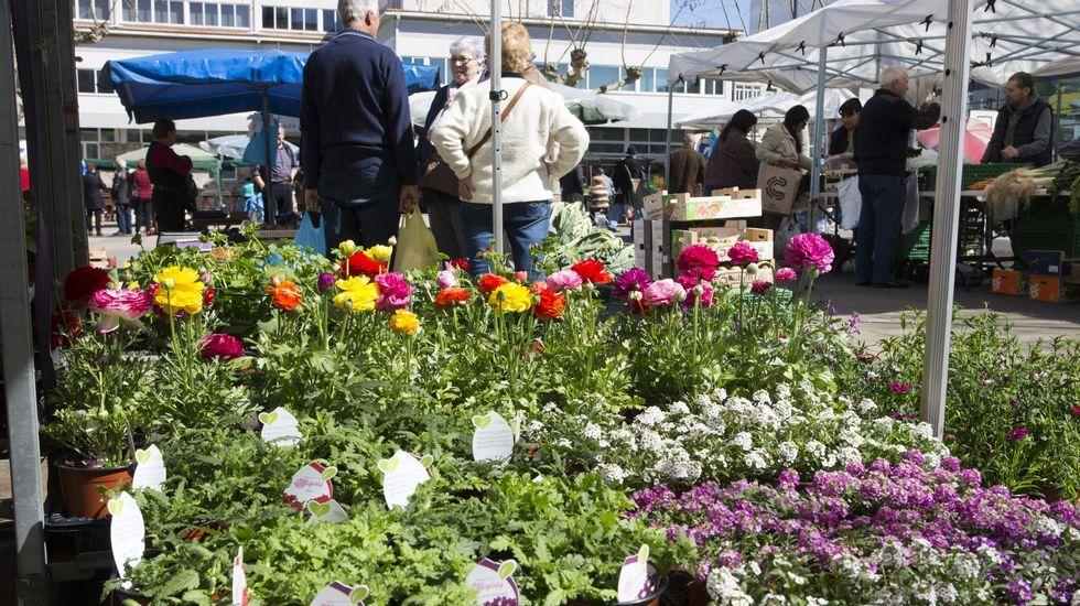 El primer mercado de primavera en Carballo: ¡visítalo en imágenes!