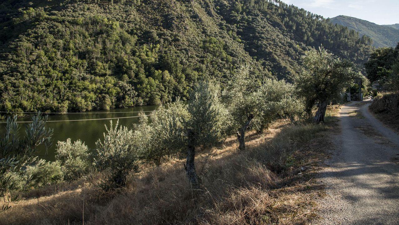 En torno al pueblo crecen numerosos olivos