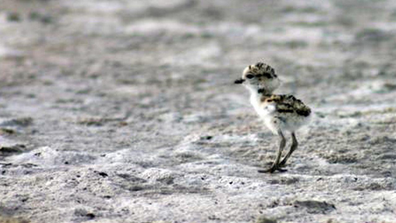 Turismo ornitológico en elcañón del Sil.Águila culebrera (Circaetus gallicus)