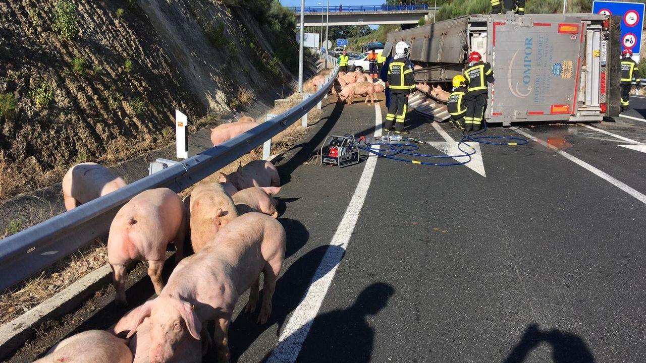 Vuelca un camión lleno de cerdos en la autovía AG-53 a la altura de Piñor