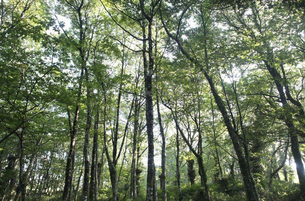 El incendio de Boborás calcinó unas 185 hectáreas.El informe del Consello da Cultura insta a la Xunta a preservar las masas arbóreas afectadas.