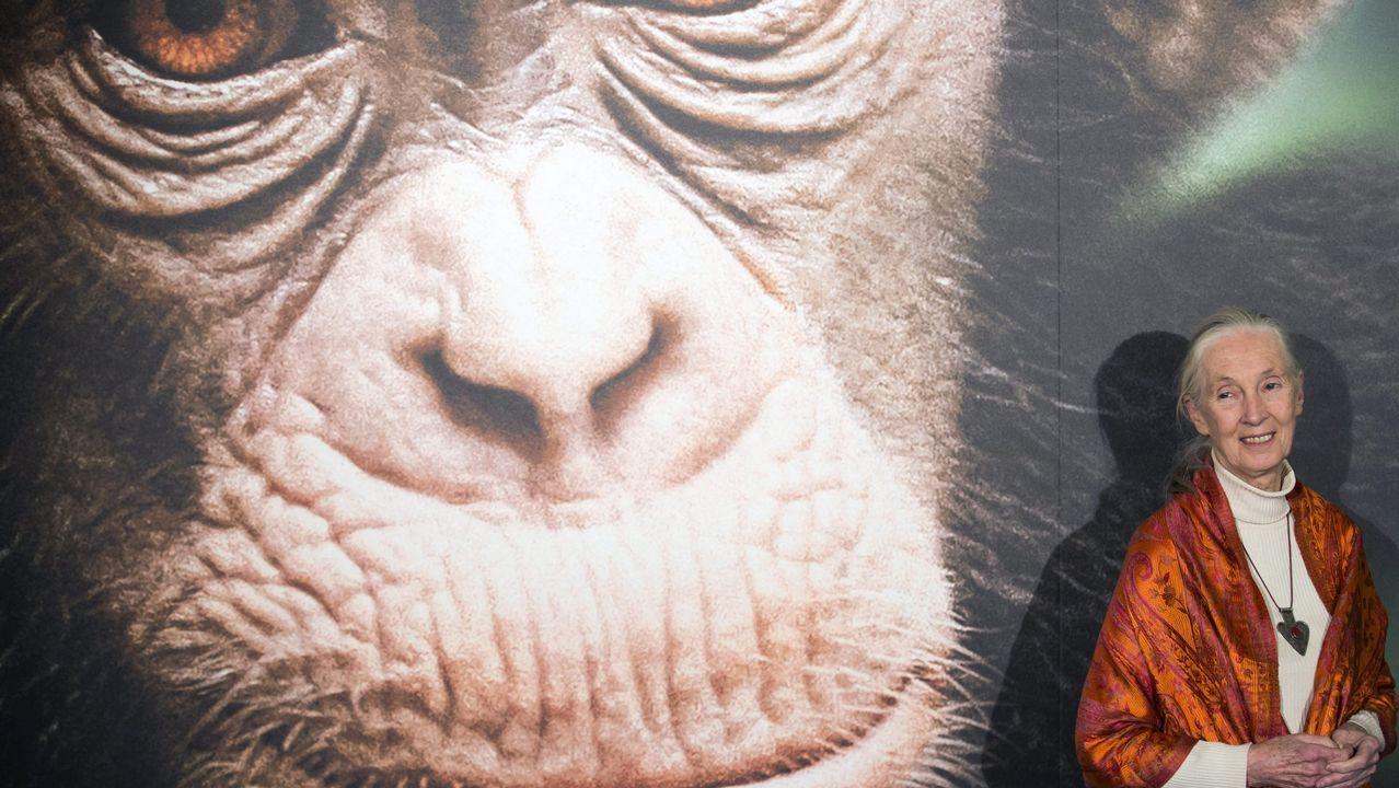 Un coruñés en la portada de Science.Mittermeier impulsó la creación de la Liga Internacional de Fotógrafos de Conservación