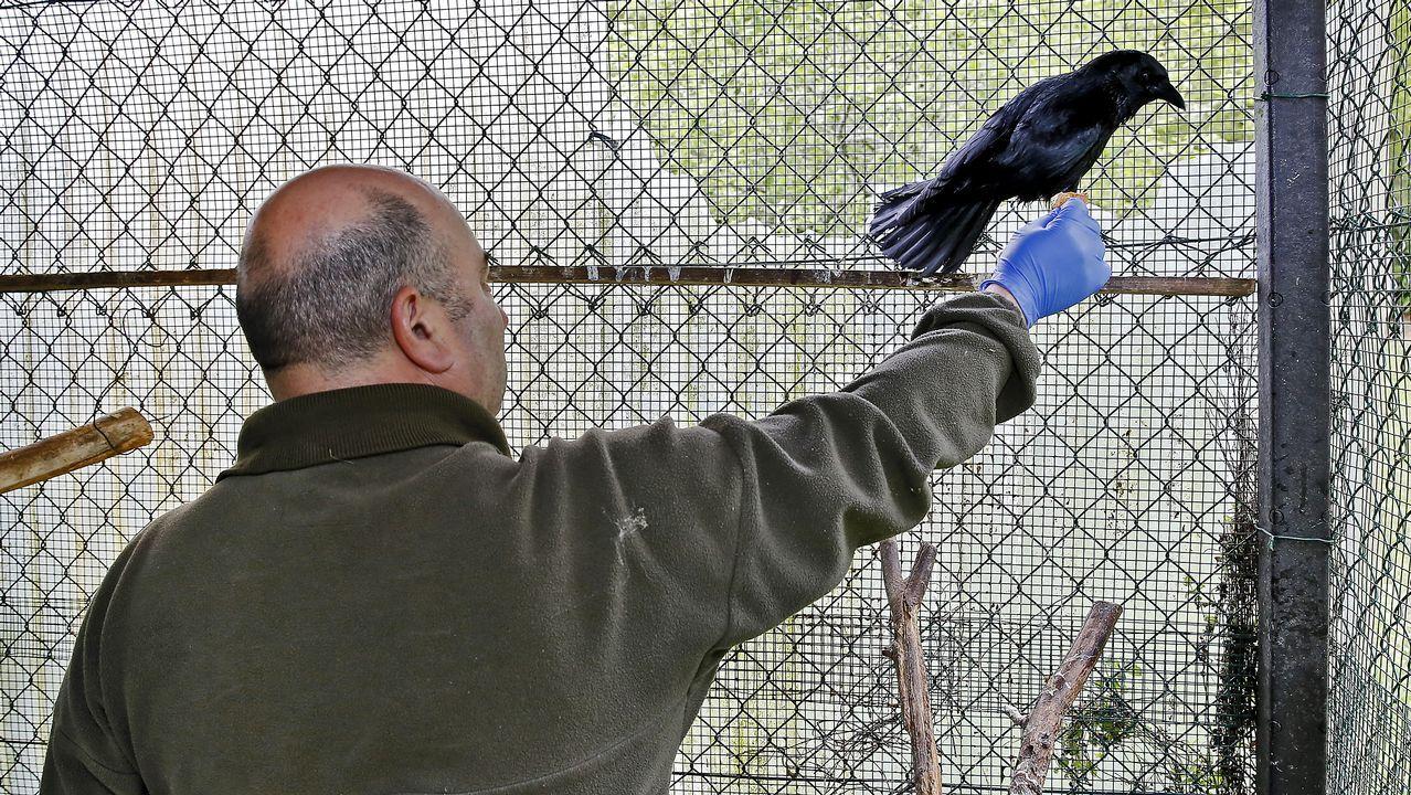 Exhibición de las diferentes unidades de la Guardia Civil en Sarria.Agentes del Seprona rastrean los montes del Principado en busca de cebos envenenados, con la ayuda de un Guía canino del Servicio Cinológico (Madrid)