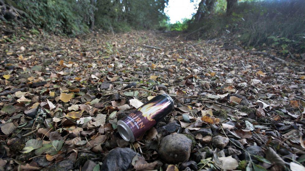 Semillas de hierba para regenerar el monte de Chavaga