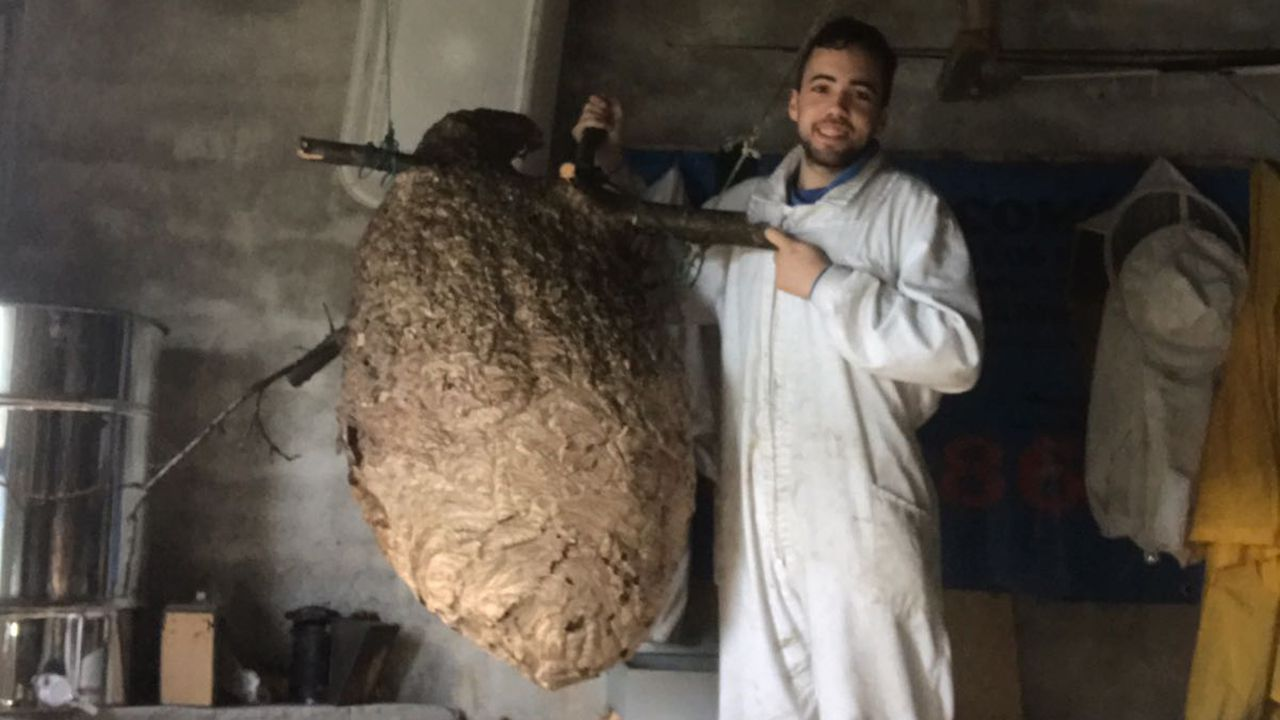 .Jonathan Suárez  posa con el nido de avispa asiática